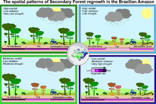 Spatial patterns of secondary forest regrowth